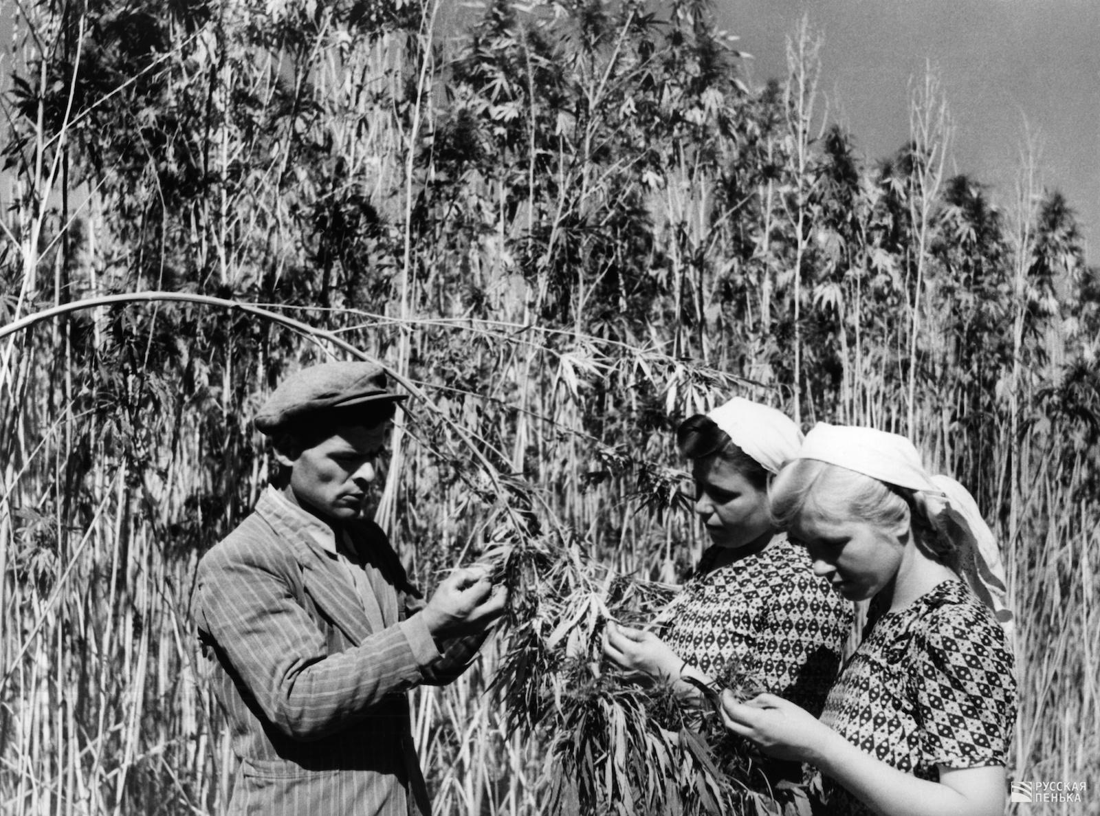 товаров услуг выращивание льна в ссср картинки установка