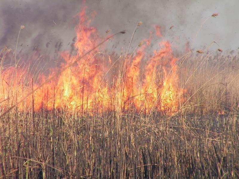 У Голопристанському районі згоріло 5 га очерету