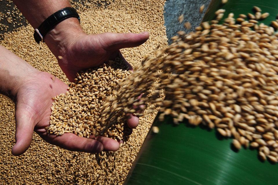 Как сделать закрома для зерна 221