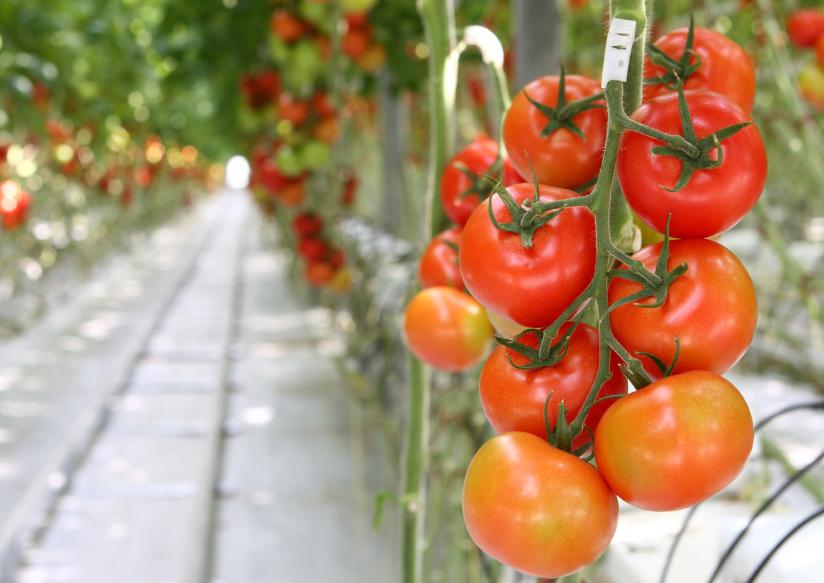 фильма фото в теплице с овощами этой