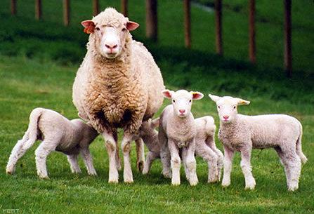 скачать овцеводство игру - фото 6