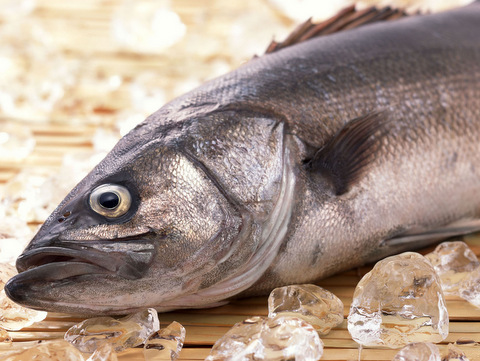 В Курганской области разработана программа поддержки товарного рыбоводства