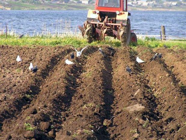 Курсовые колебания нехватка денег у аграриев и инициативы  пн