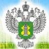 В Красноармейском и Славянском районах Краснодарского края на предприятия наложен карантин из-за амброзии