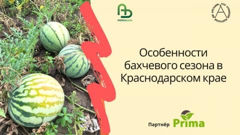 Особенности бахчевого сезона в Краснодарском крае