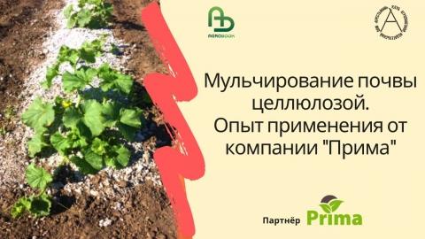 """Мульчирование почвы целлюлозой. Опыт применения от компании """"Прима"""""""