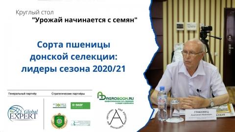 Сорта пшеницы донской селекции: лидеры сезона 2020/21