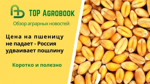 Цена на пшеницу не падает - Россия удваивает пошлину. TOP Agrobook: обзор аграрных новостей