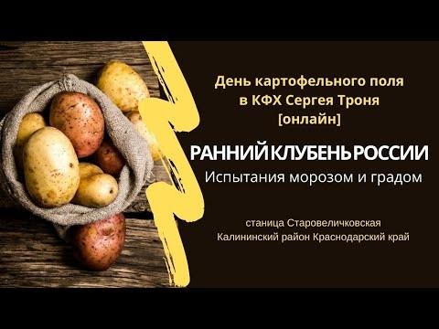 Новые сорта картофеля выдержали экстремальные испытания нынешней весны