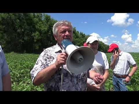 Поля хозяйства ООО «Урожайное». Опыт выращивания гороха, подсолнечника, льна. «No-tillExpo 2021»