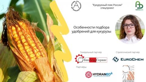 Особенности подбора удобрений для кукурузы
