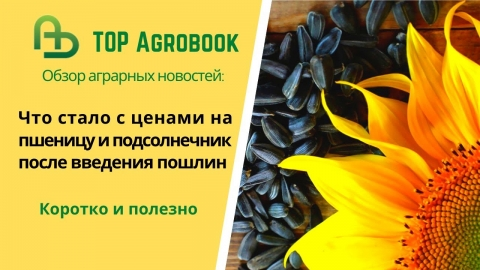 Что стало с ценами на пшеницу и подсолнечник после введения пошлин. TOP Agrobook: обзор агроновостей