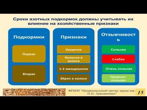 Особенности подкормки озимой пшеницы в разные фазы развития