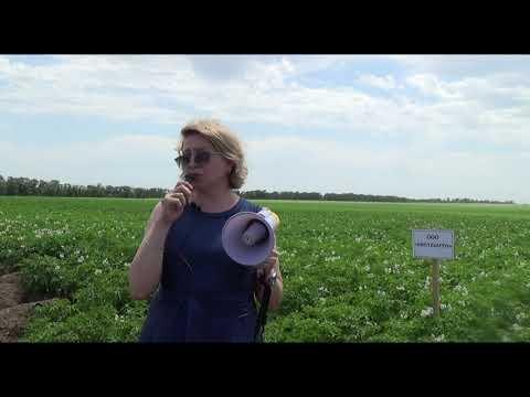 Применение биофунгицидов при выращивании картофеля