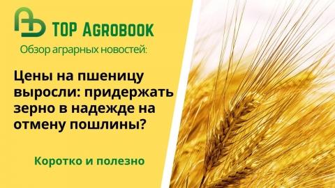 Цены на пшеницу выросли: придержать зерно в надежде на отмену пошлины? TOP Agrobook: агроновости