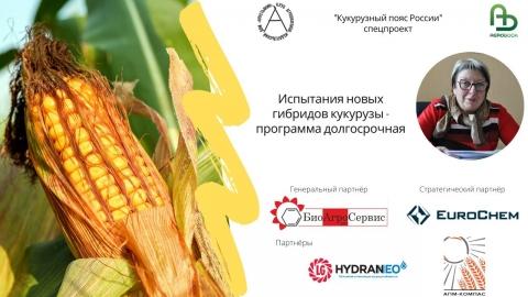 Испытания новых гибридов кукурузы - программа долгосрочная