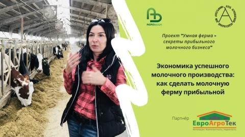 Экономика успешного молочного производства: как сделать молочную ферму прибыльной