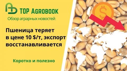 Пшеница теряет в цене 10 $/т, экспорт восстанавливается. TOP Agrobook: обзор аграрных новостей