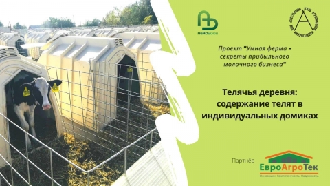 Телячья деревня: содержание телят в индивидуальных домиках. Умная ферма: прибыльный молочный бизнес