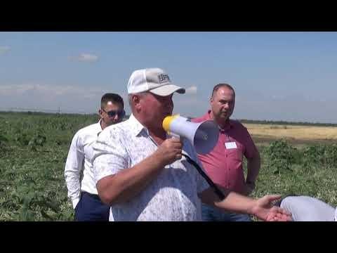 Выращивание лука в КФХ Николая Юзефова