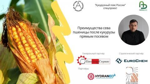 Преимущества сева пшеницы после кукурузы прямым посевом