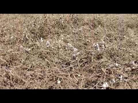 Нашествие улиток губит урожай в Крыму