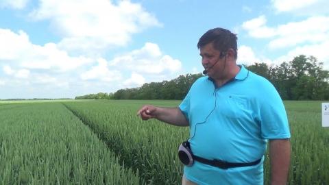 День поля РЗ Агро Семена. Демонстрация посевов озимой пшеницы сезона 2020/21