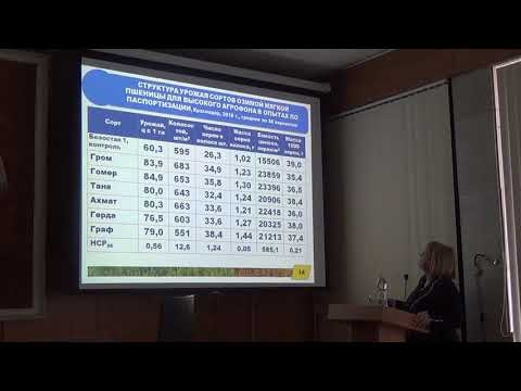 Новые продуктивные сорта озимой пшеницы краснодарской селекции
