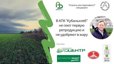 """В АПК """"Кубаньхлеб"""" не сеют первую репродукцию и не удобряют в жару"""