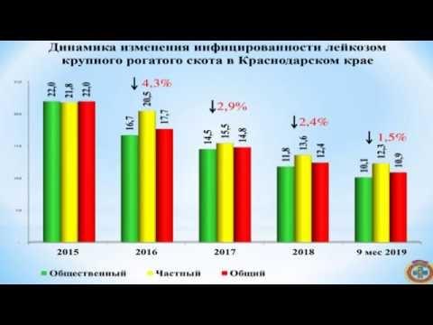 Почему Краснодарский край стал избавляться от инфицированного лейкозом скота