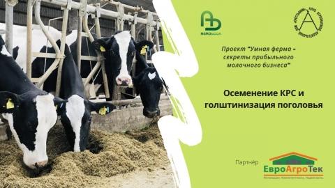 """Осеменение и голштинизация поголовья. """"Умная ферма"""": секреты прибыльного молочного бизнеса"""