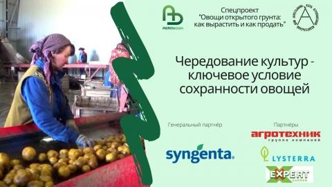 Чередование культур – ключевое условие сохранности овощей