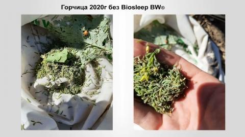 Новые препараты Bionovatic для земледелия посистеме NO-Till