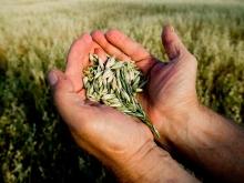 Поздравляем вас с Общероссийским Днем Фермера!
