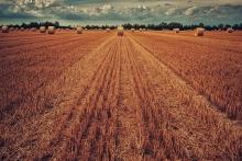 В преддверии нового сезона многие гадают, каким он получится и какую стратегию выстраивать аграрию. Кто-то заранее считает, что после нескольких лет роста неизбежно падение, кто-то следит за погодой и осторожен в прогнозах. Расскажу, что на данный момент удалось узнать на этот счет.