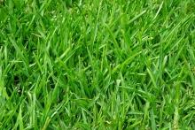 Лигногумат и зернобобовые: высокие урожаи – это просто!