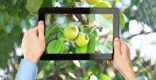 РСХБ и ИПУ РАН помогут аграриям диагностировать здоровье растений с помощью цифровых технологий