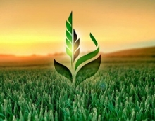 пао сельскохозяйственная экспортная корпорация