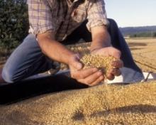 Перед уборкой ставропольские аграрии анализируют зерновой рынок