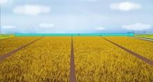 Автоматизировать зерновое производство надо
