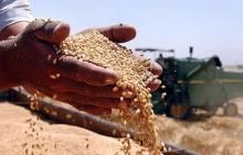 По прогнозам гидрометцентра урожай будет на уровне прошлогоднего.