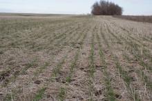 На севере Ростовской области фермер научился получать стабильные урожаи