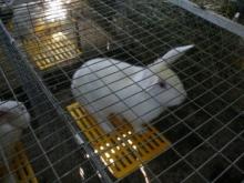 Любовь и кролики