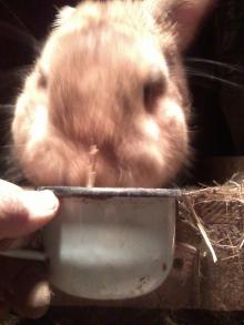 Дрожжевание корма для кролика