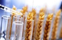 По-моему, есть три темы в мировой современной науке, которые вызывают наибольшее количество споров и неоднозначные отзывы. Одна из них напрямую связана с сельским хозяйством.
