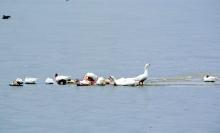 В Ростовской области спасатели вызволили из ледового плена домашних гусей