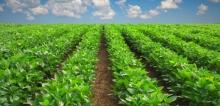 Как втрое повысить рентабельность растениеводства и уйти от «химии»?