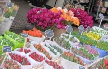 Берег тюльпанов