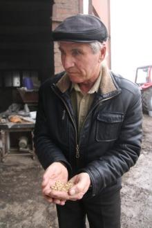 Прародительнице пшеницы не страшны ни вредители, ни болезни