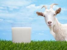 В Смоленске появятся автоматы с козьим молоком